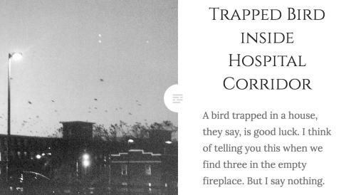 trappedbird
